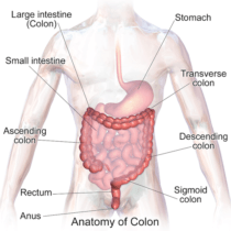 Colon Surgery Can Help When Medications and Other Treatments Fail — by Dr. Seun Sowemimo, bariatric and general surgeon at Prime Surgicare, Central NJ.